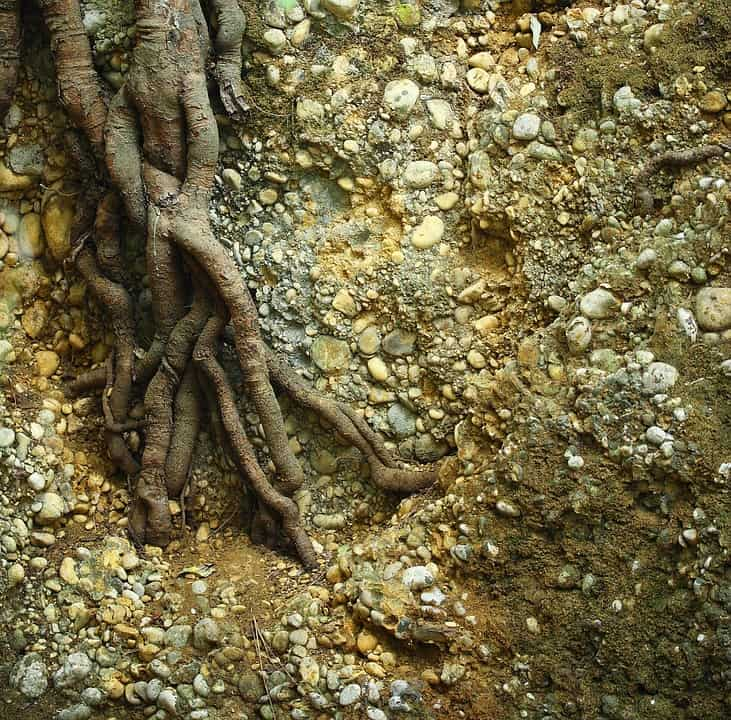 Tree roots can cause havoc to your drains and pipes